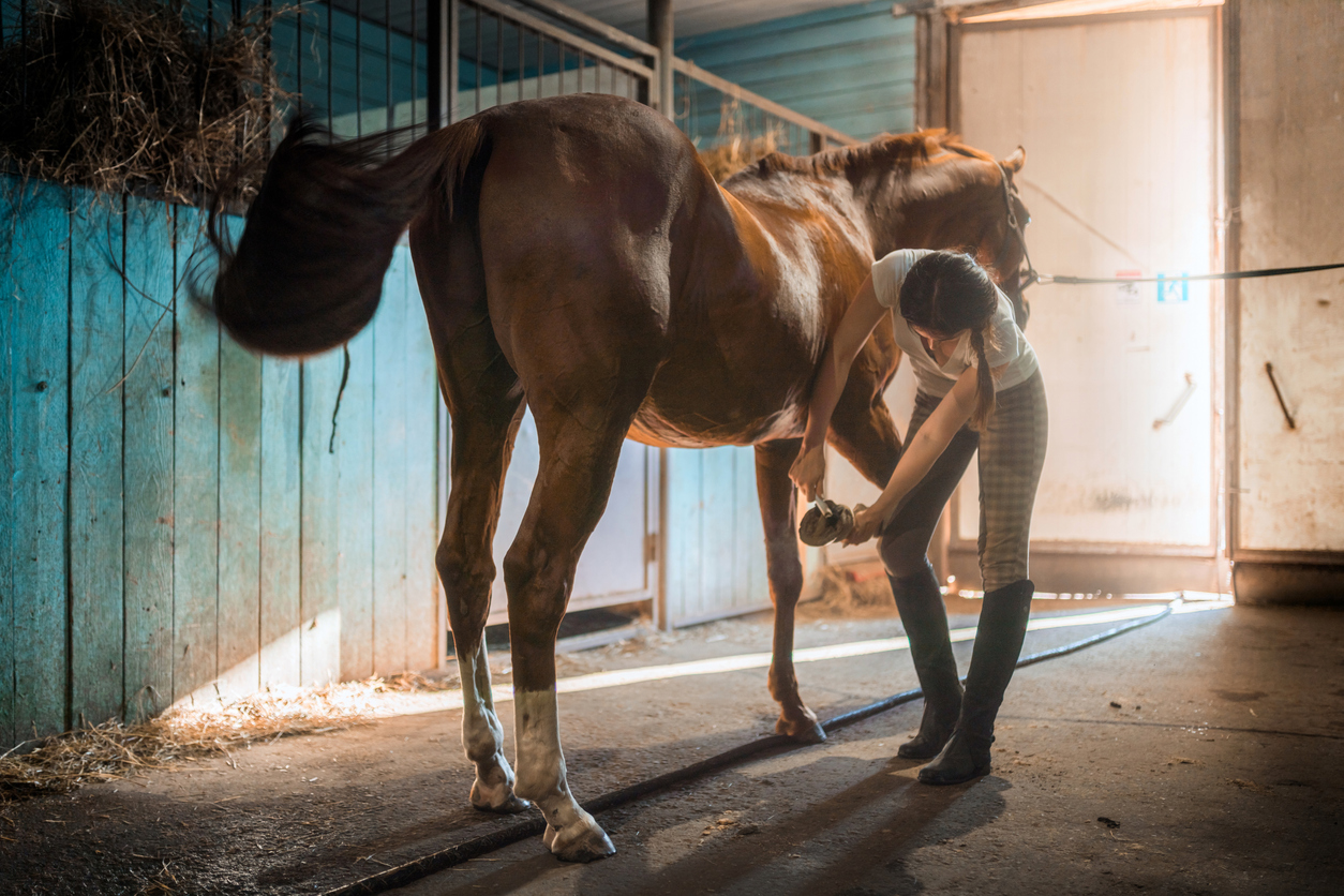 Young Woman Is Cleaning Horse's Hoof in Stable