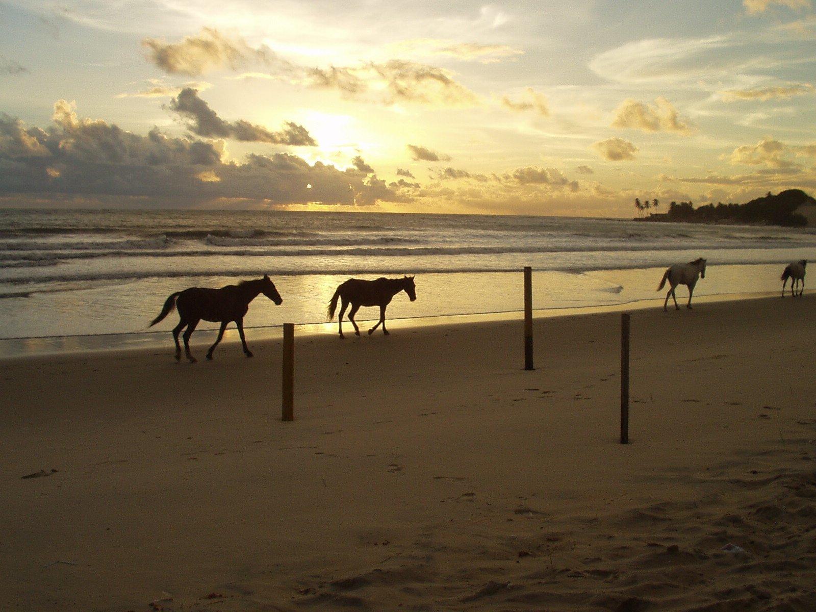 horses-1410941.jpg