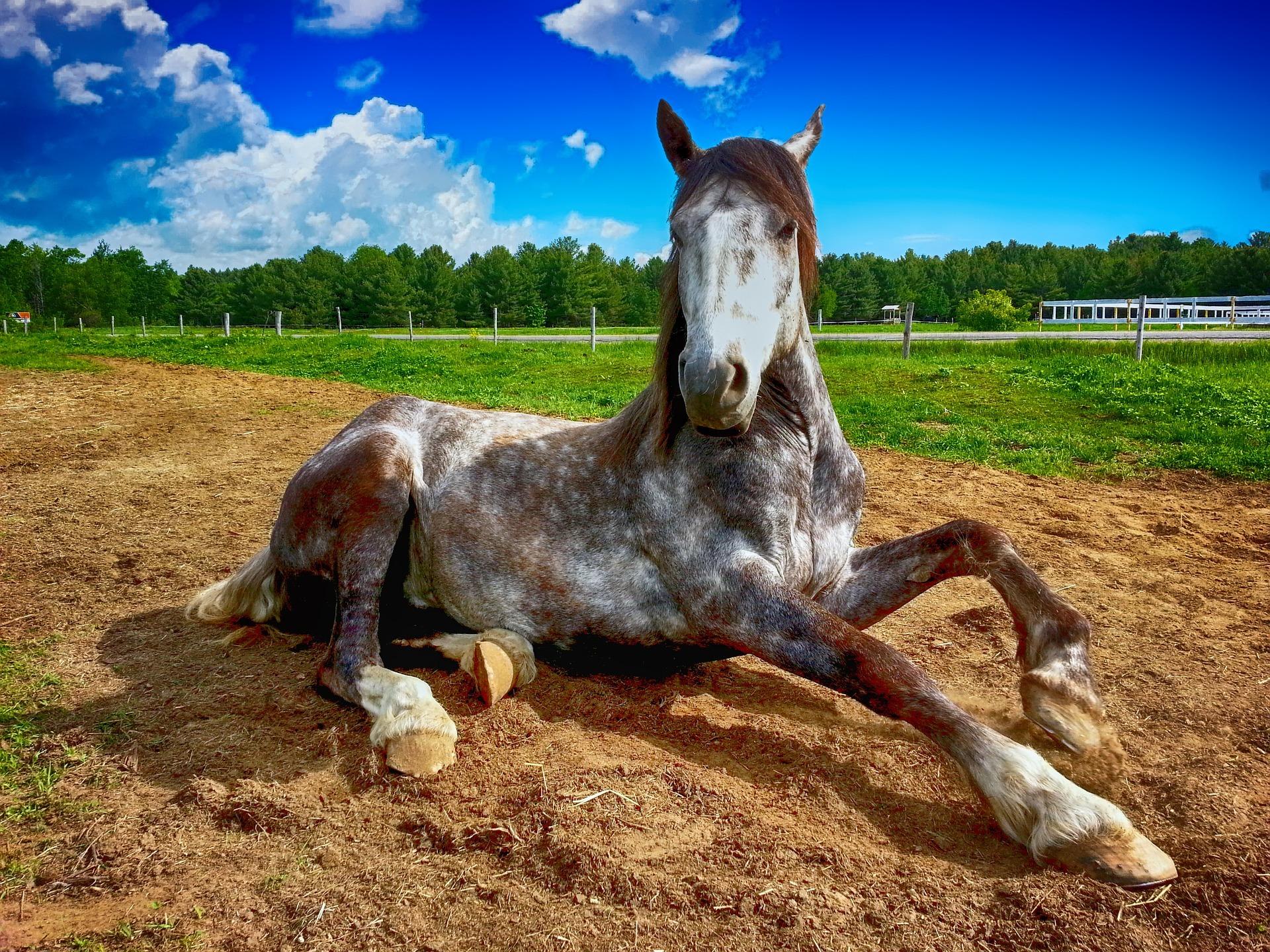 horse-2572051_1920.jpg