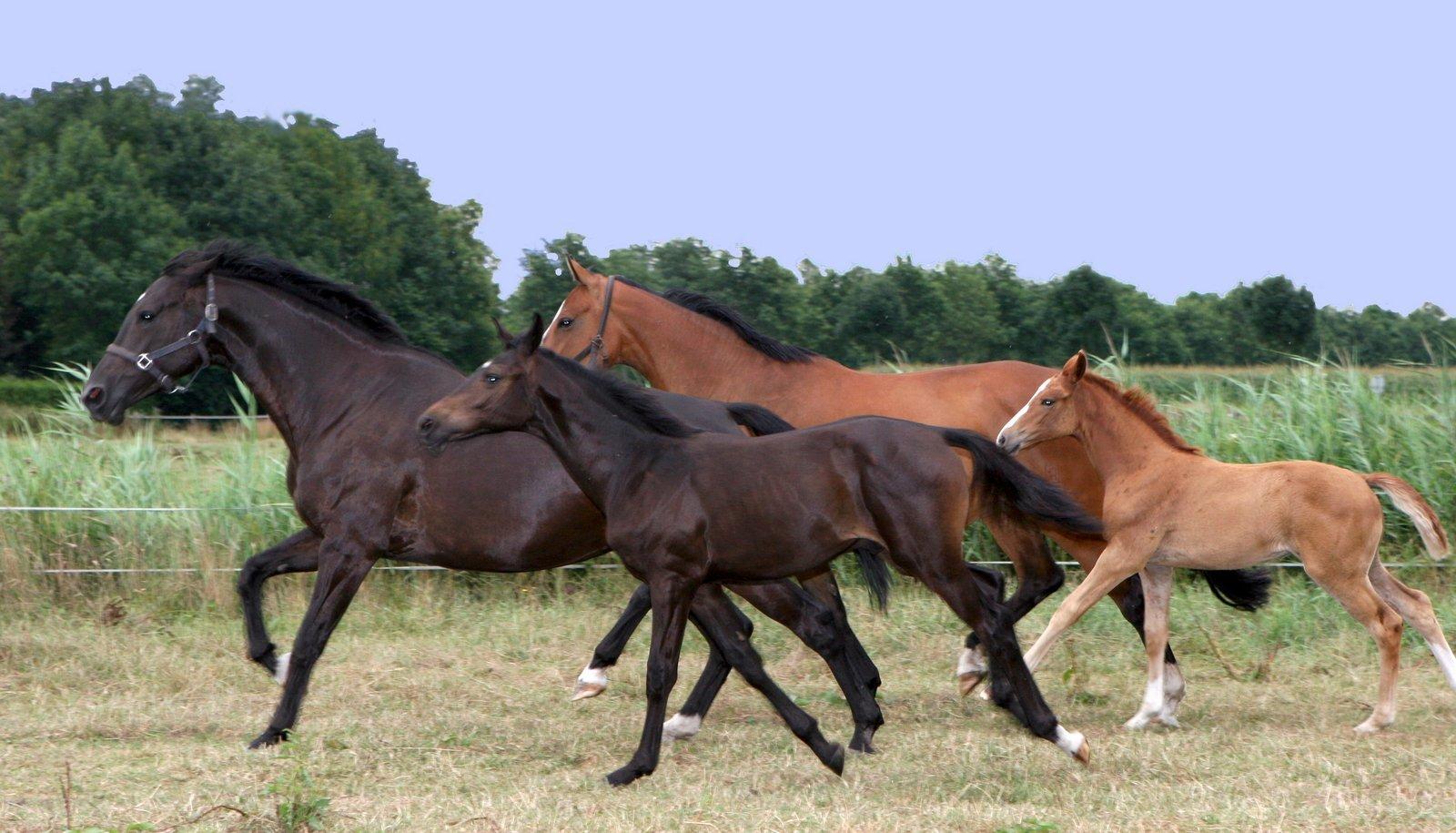 horses-1392177.jpg